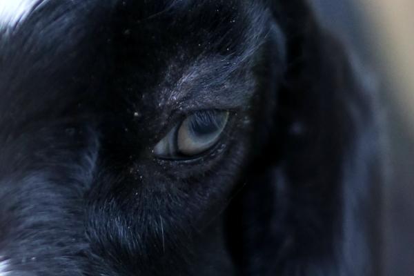 とべ動物園を応援する写真クラブのブログ-ナルちゃん