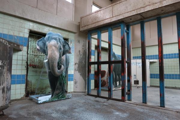 とべ動物園を応援する写真クラブのブログ-ゾウさんの写真パネル