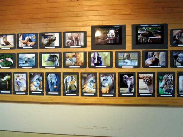 とべ動物園を応援する写真クラブのブログ-写真の撮り方講座