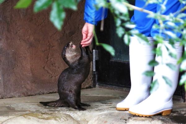とべ動物園を応援する写真クラブのブログ-うまうまタイプ