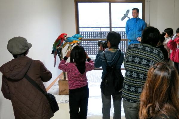 とべ動物園を応援する写真クラブのブログ-インコ