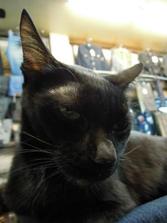 プラトゥーナームにいた猫 (5)