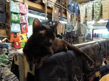 プラトゥーナームにいた猫 (3)