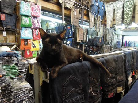 プラトゥーナームにいた猫 (1)