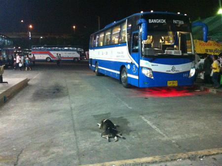 バスターミナルにいた犬 (2)