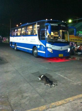 バスターミナルにいた犬 (1)