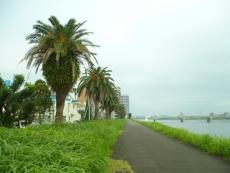 川沿いを歩いてみた