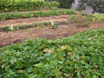 自然農ツア-2