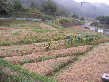 自然農ツア-8