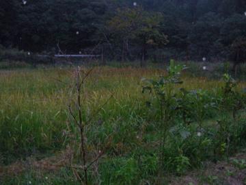 自然農ツア-15