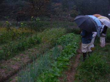 自然農ツア-13