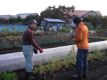 ヒメシャラ畑2