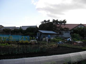 ヒメシャラ畑5