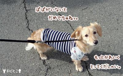 りっくんお散歩。。