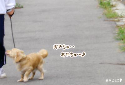 りっくんお散歩♪