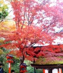 転法輪堂の紅葉