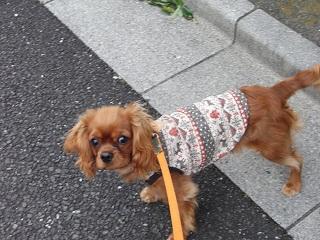 嵐丸 2011.2.19-2