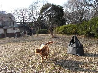 嵐丸 2011.2.21-8
