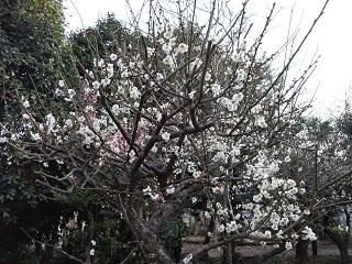 嵐丸 2011.2.23-1