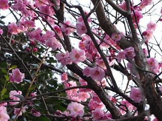 嵐丸 2011.2.23-2