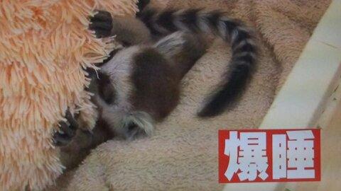 志村動物園第2回命名 (9)