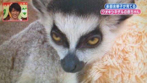 志村動物園第3回 寝る寸前①