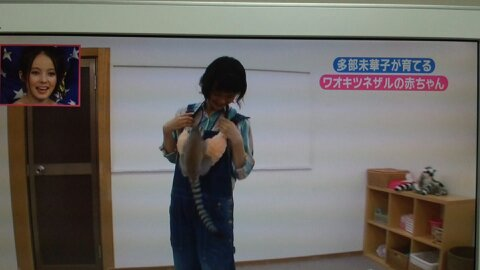 志村動物園第4回大きくなったコハク