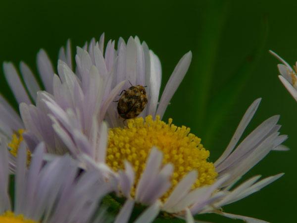 2011-06-05_EX-Z850_1606.jpg