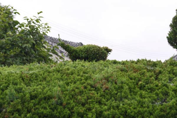 2011-06-19_EOS30D_2111.jpg