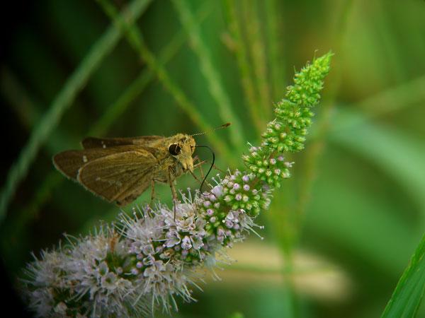 2011-08-20_EX-Z850_0381.jpg