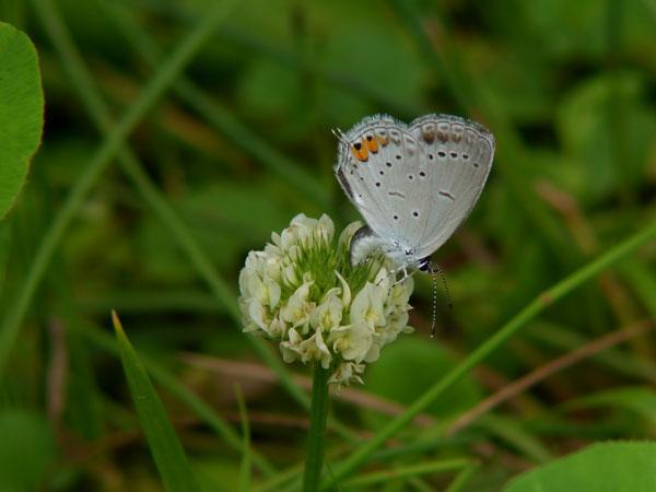 2011-06-12_デジスコZ850_196
