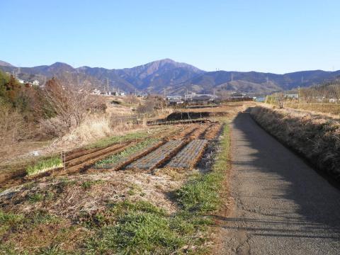 春の坂本古道145
