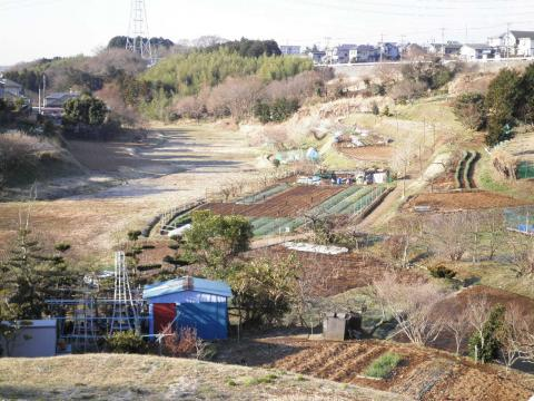 春の藤棚の谷140