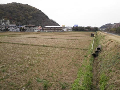 春の田んぼ43