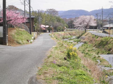 桜の道76