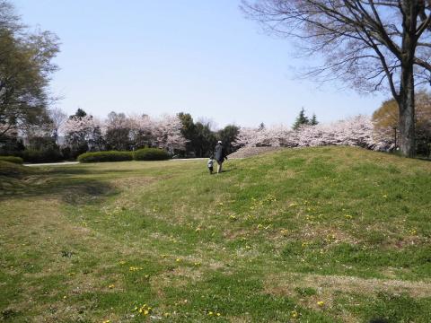 古墳と桜57