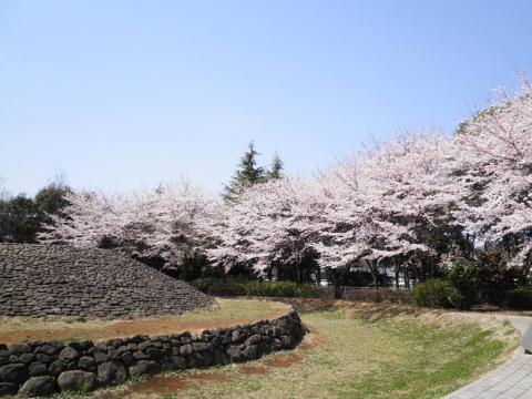 古墳と桜40