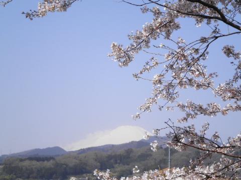 富士と桜22