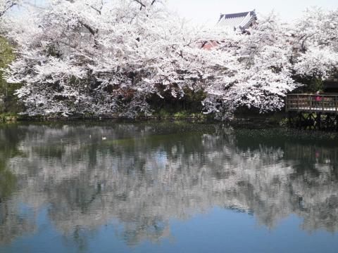 水面の桜136