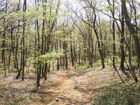 萌黄の林257