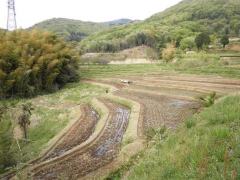 春の田んぼ08