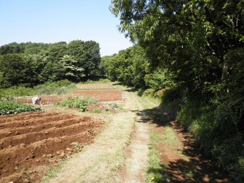 若葉の農道72