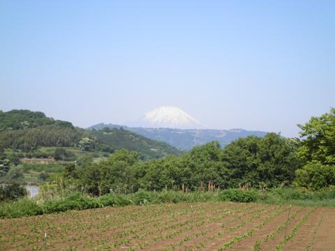 富士を望む59