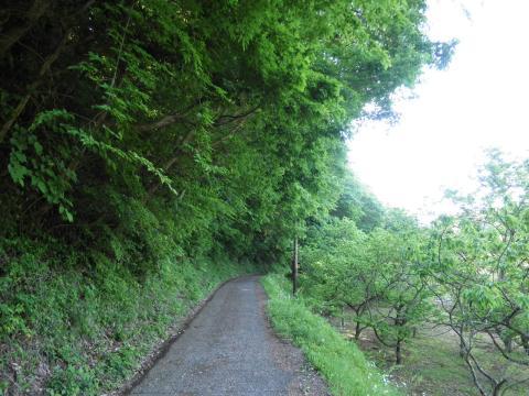新緑の農道13