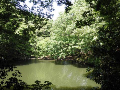 新緑の湖畔157