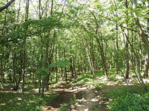 新緑の林94