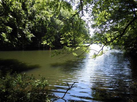 新緑の湖101