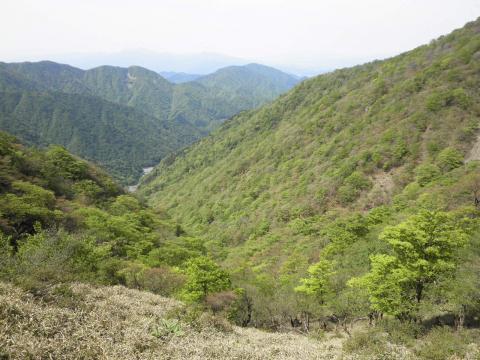谷の新緑184