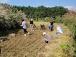 稲刈り応援1