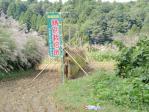 稲刈り応援4